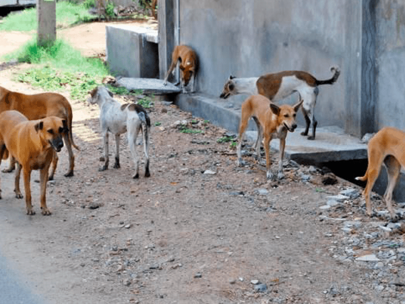 British woman mauled to death by stray dogs in Greece 11