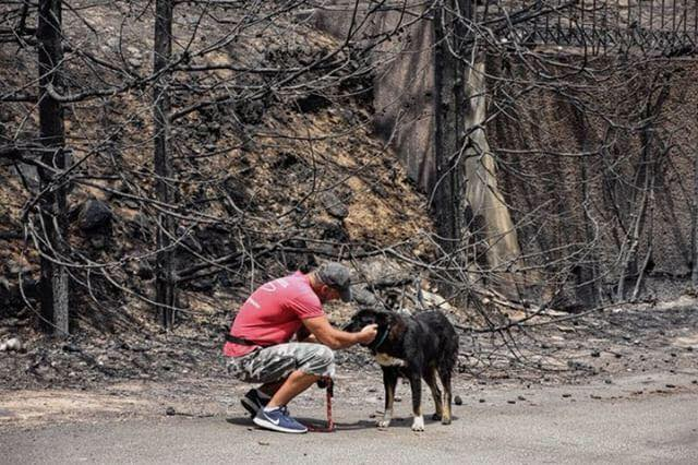 Mati wildfires, stray dog