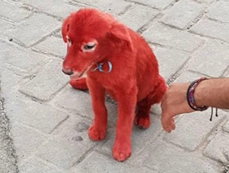 Public rage as puppy is found with hair dyed red in Chalkida 1