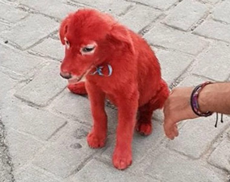 Public rage as puppy is found with hair dyed red in Chalkida 8