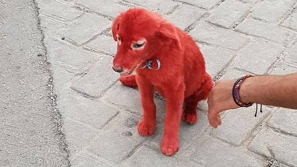 Public rage as puppy is found with hair dyed red in Chalkida 2