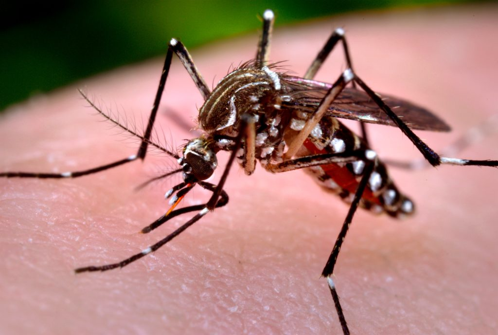 Two birds test positive for West Nile virus in British Columbia