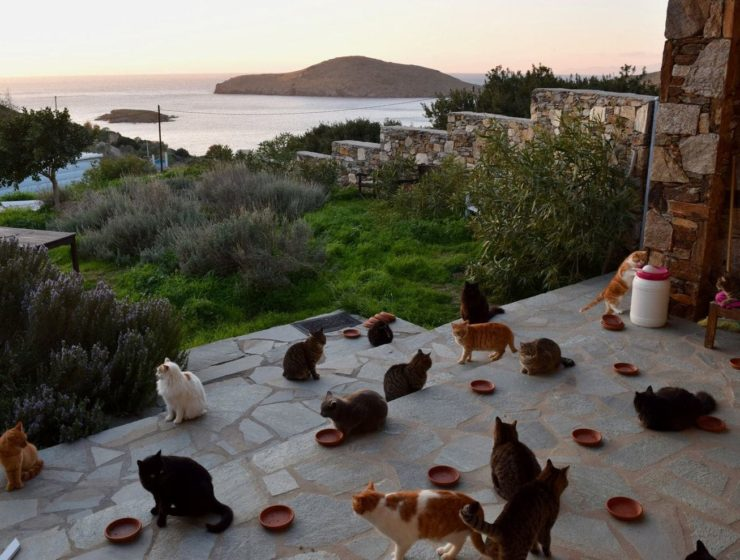 Syros cat sanctuary