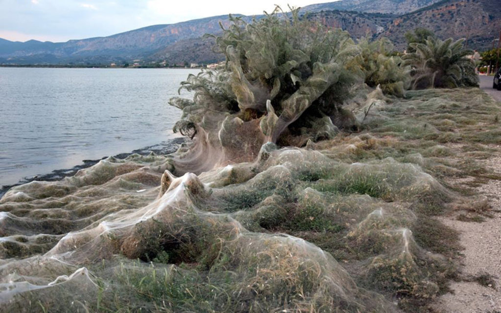 Greek Spiders Take Over Beach with Webs Everywhere