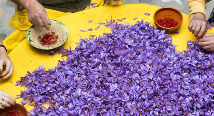 Greek saffron known as the best in the world 6