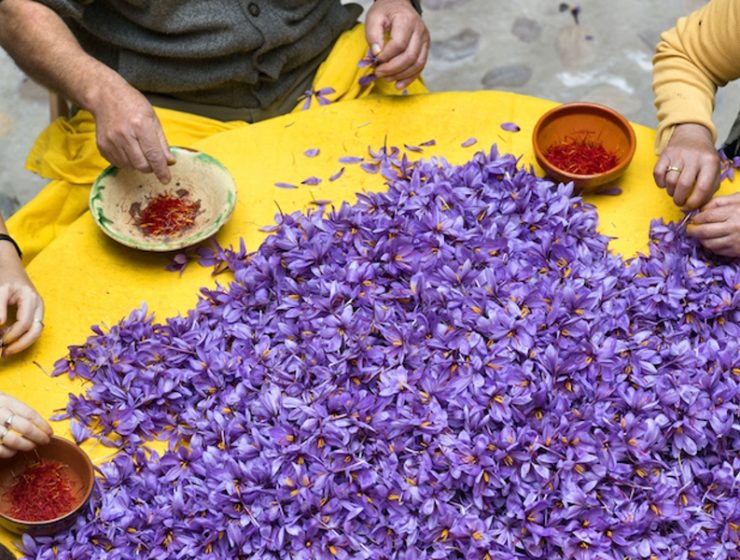 Greek saffron known as the best in the world 2