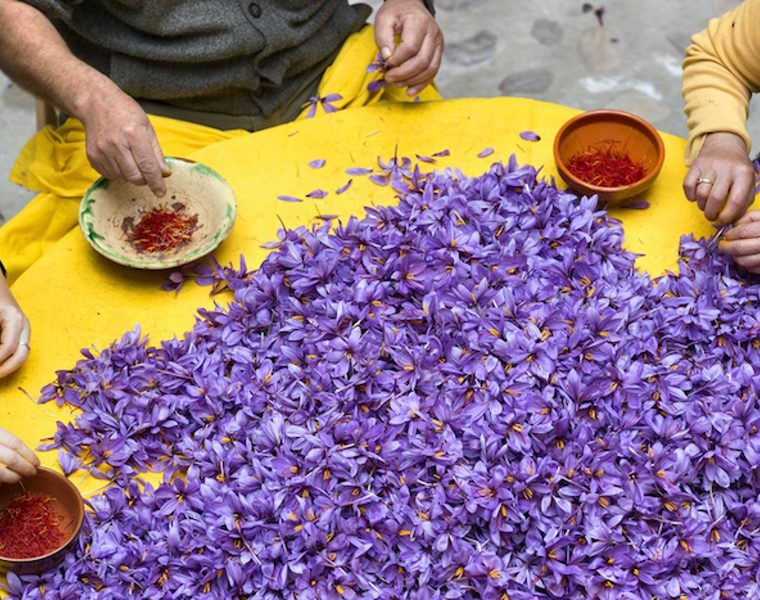 Greek saffron known as the best in the world 8