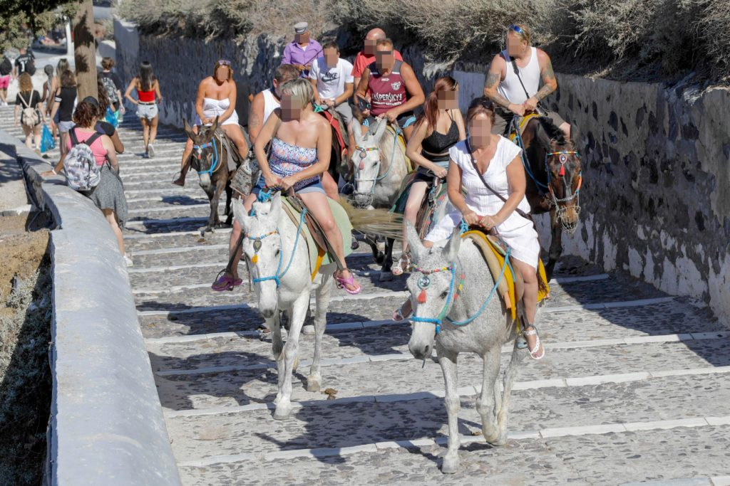 Obese tourists banned from donkey rides in Greece 2