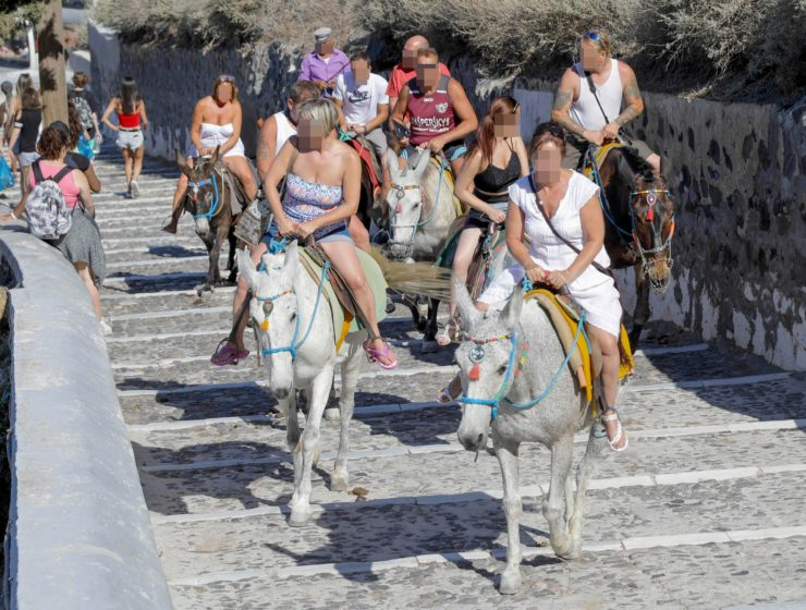 Obese tourists banned from donkey rides in Greece 15
