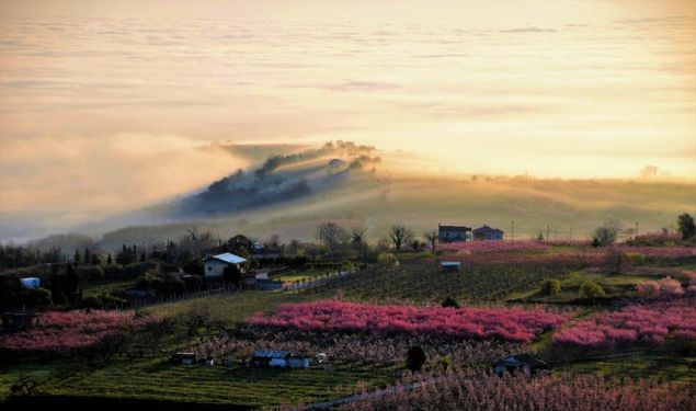 Veria's stunning Peach Farms are set to become world famous 3