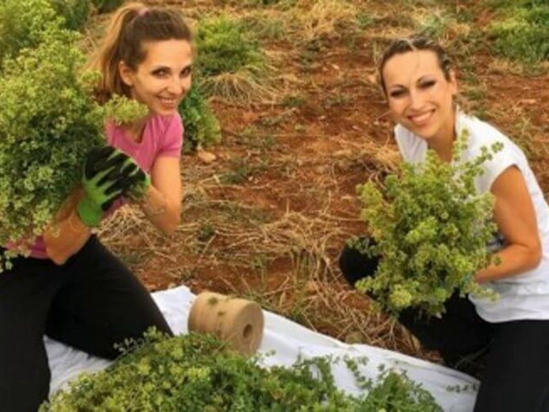 Sisters take risk at launching organic herb company at peak of Greek crisis and succeed 1