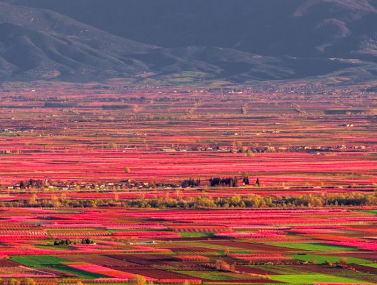 Veria's stunning Peach Farms are set to become world famous 6