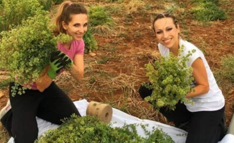 Sisters take risk at launching organic herb company at peak of Greek crisis and succeed 4
