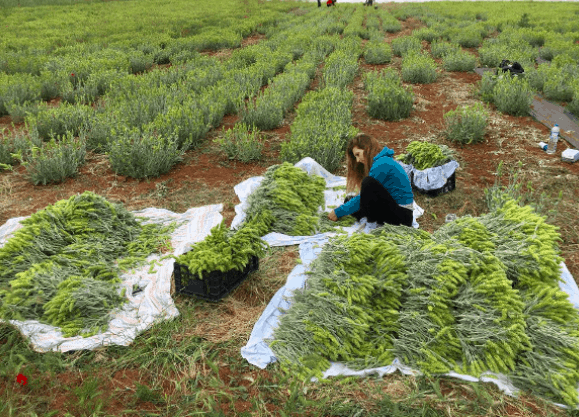 Sisters take risk at launching organic herb company at peak of Greek crisis and succeed 5