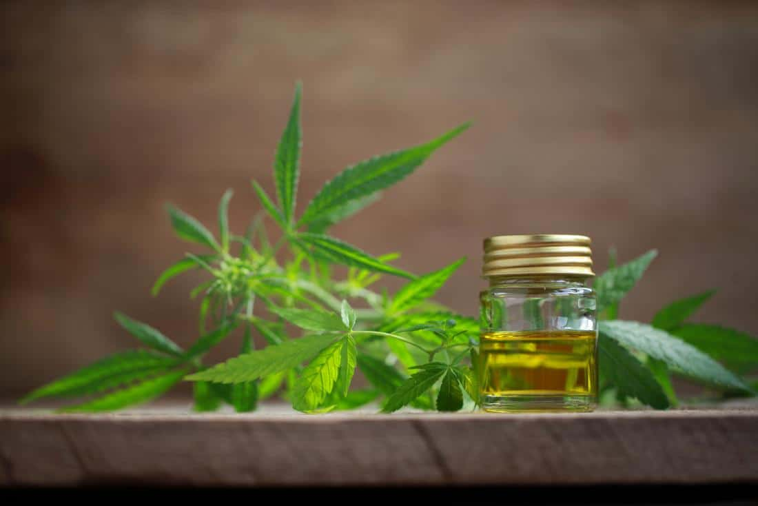 Greece getting high on 350-million-euro cannabis investments — Greek City Times