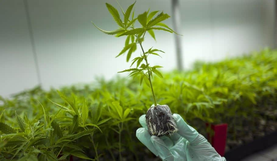 Greek govt issues medicinal cannabis license for manufacturing facilities in Corinth 2