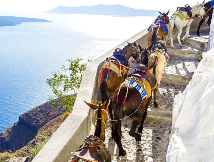 Tourists in Santorini urged to take the steps instead of riding donkeys 7