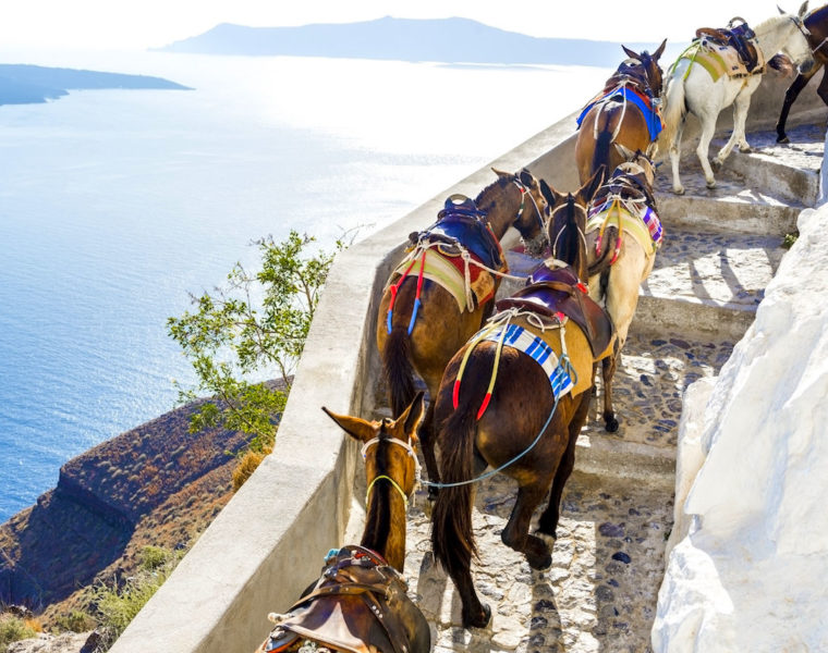 Tourists in Santorini urged to take the steps instead of riding donkeys 15