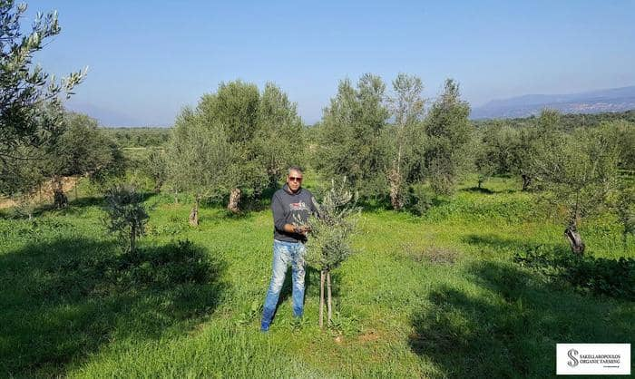 Greek olive oil producer sets world record winning over 100 competitions 13
