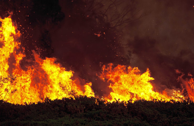 Large wildfire blazes through forest area of Peloponnese 46