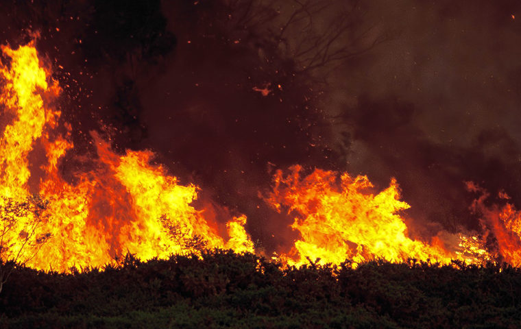 Large wildfire blazes through forest area of Peloponnese 12