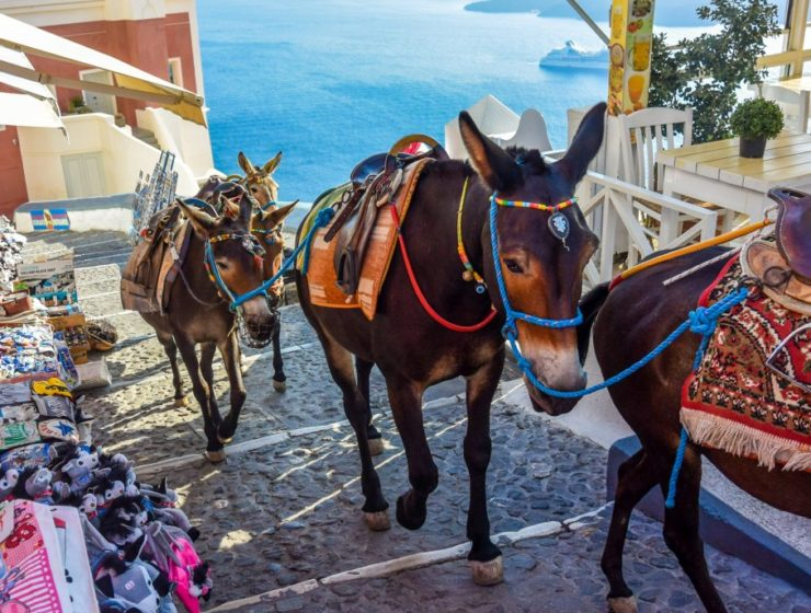 Animal activists accuse Greece of covering up donkey 'abuse' in Santorini 5