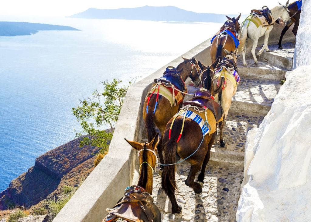 """Animal activists claim they were assaulted while filming """"donkey abuse"""" in Santorini  2"""