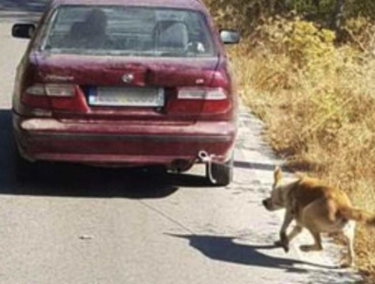 Man arrested in Crete after dragging a dog with his car 2