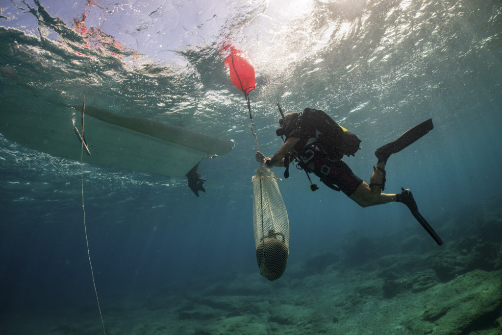 Five ancient shipwrecks discovered off the island of Kasos 3