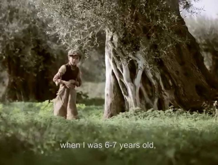 Touching short film celebrates Greece's ever-lasting connection with Olive trees (VIDEO) 1