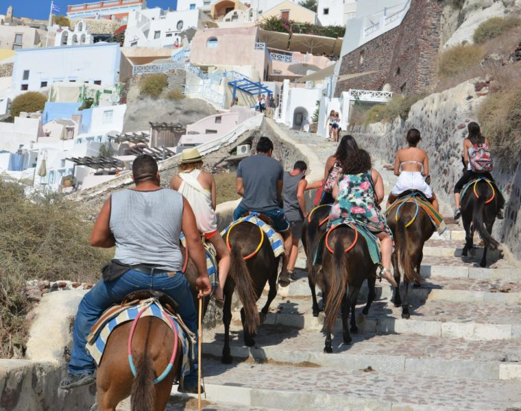 Animal rights group claims Donkeys are still being abused in Santorini (VIDEO) 3