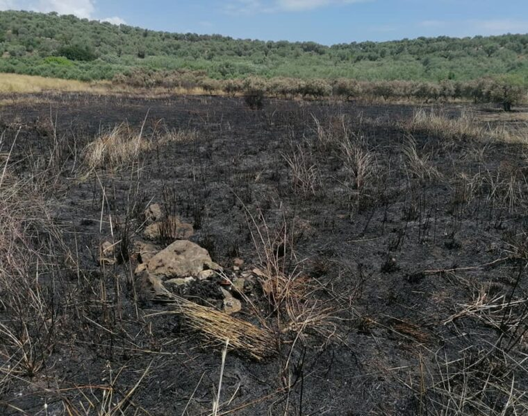 Illegal immigrants burn olive grove in Lesvos 16