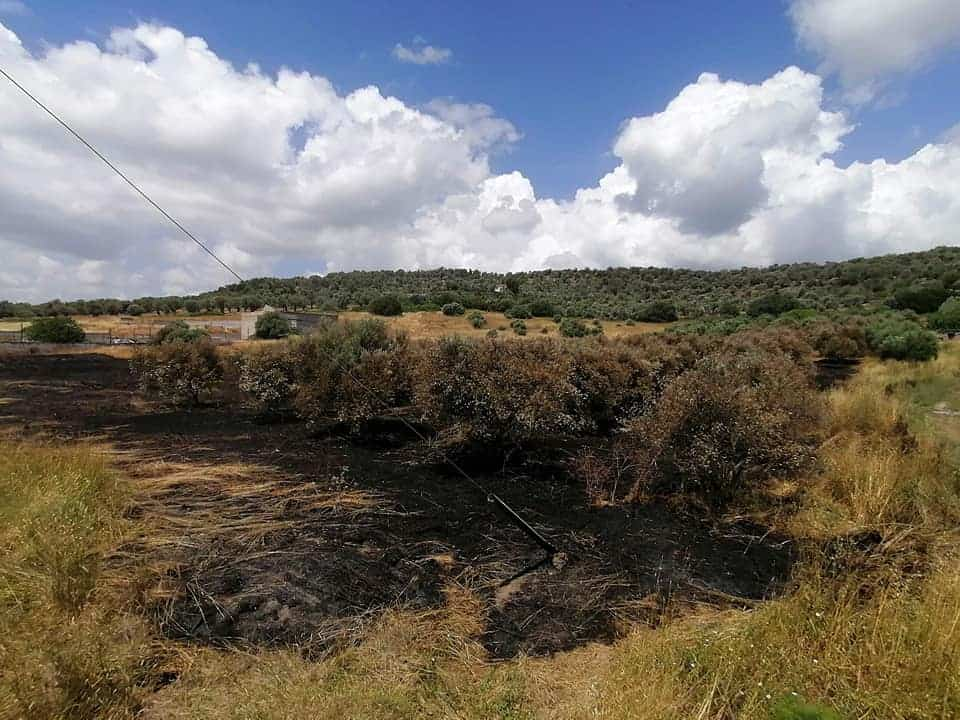 Illegal immigrants burn olive grove in Lesvos 5