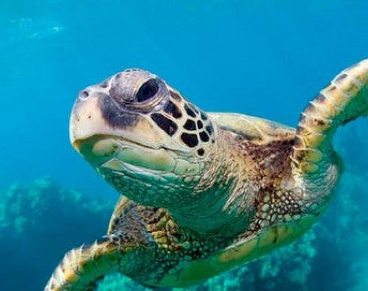 Two injured turtles rescued in Limassol, Cyprus 1