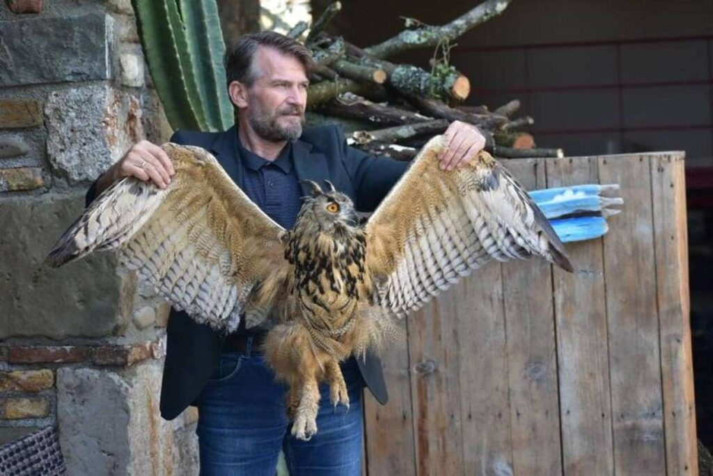 Large owl rescued in Acheloos