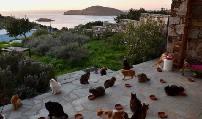 Cats of Syros