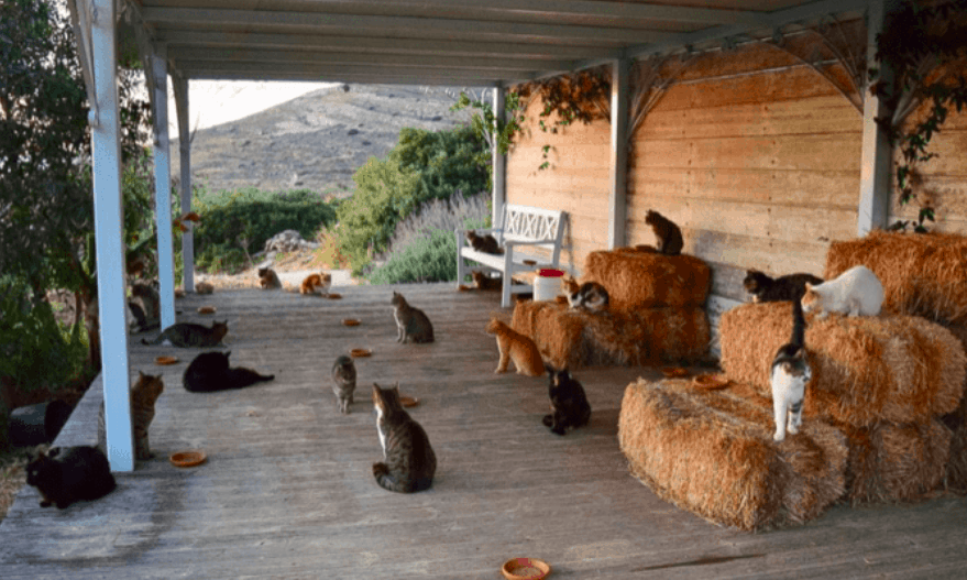 Cats (of Syros). The Netflix Documentary. 1