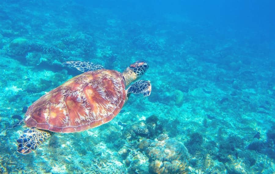 Sea turtle deaths in Greece set record